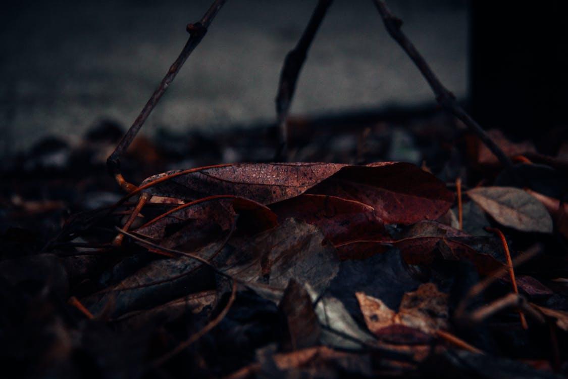 專注, 景深, 枯葉