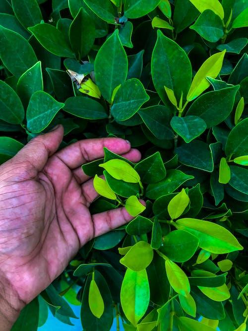 Adobe Photoshop, 佳能, 常綠, 自然 的 免費圖庫相片