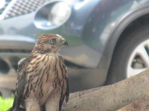 Free stock photo of baby bird