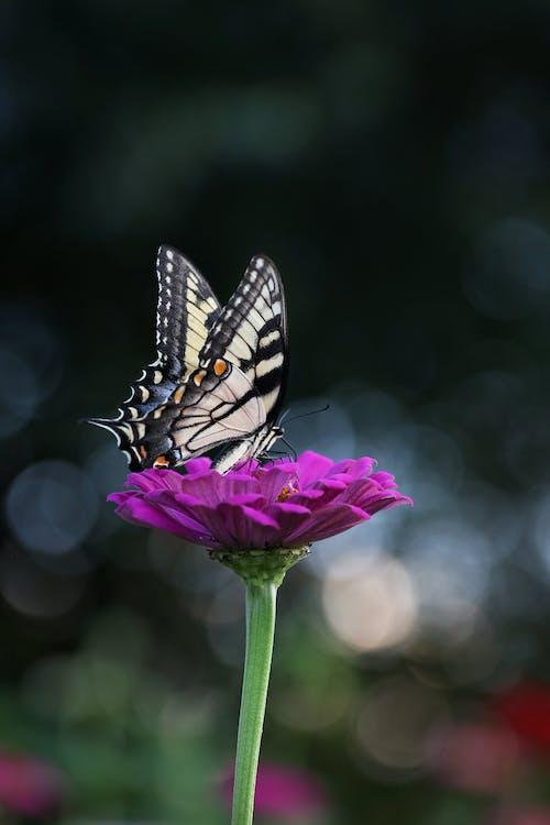 ailes, animal, brillant