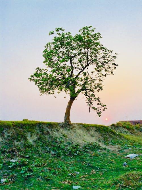Darmowe zdjęcie z galerii z bagażnik, cichy, drzewo, gałęzie