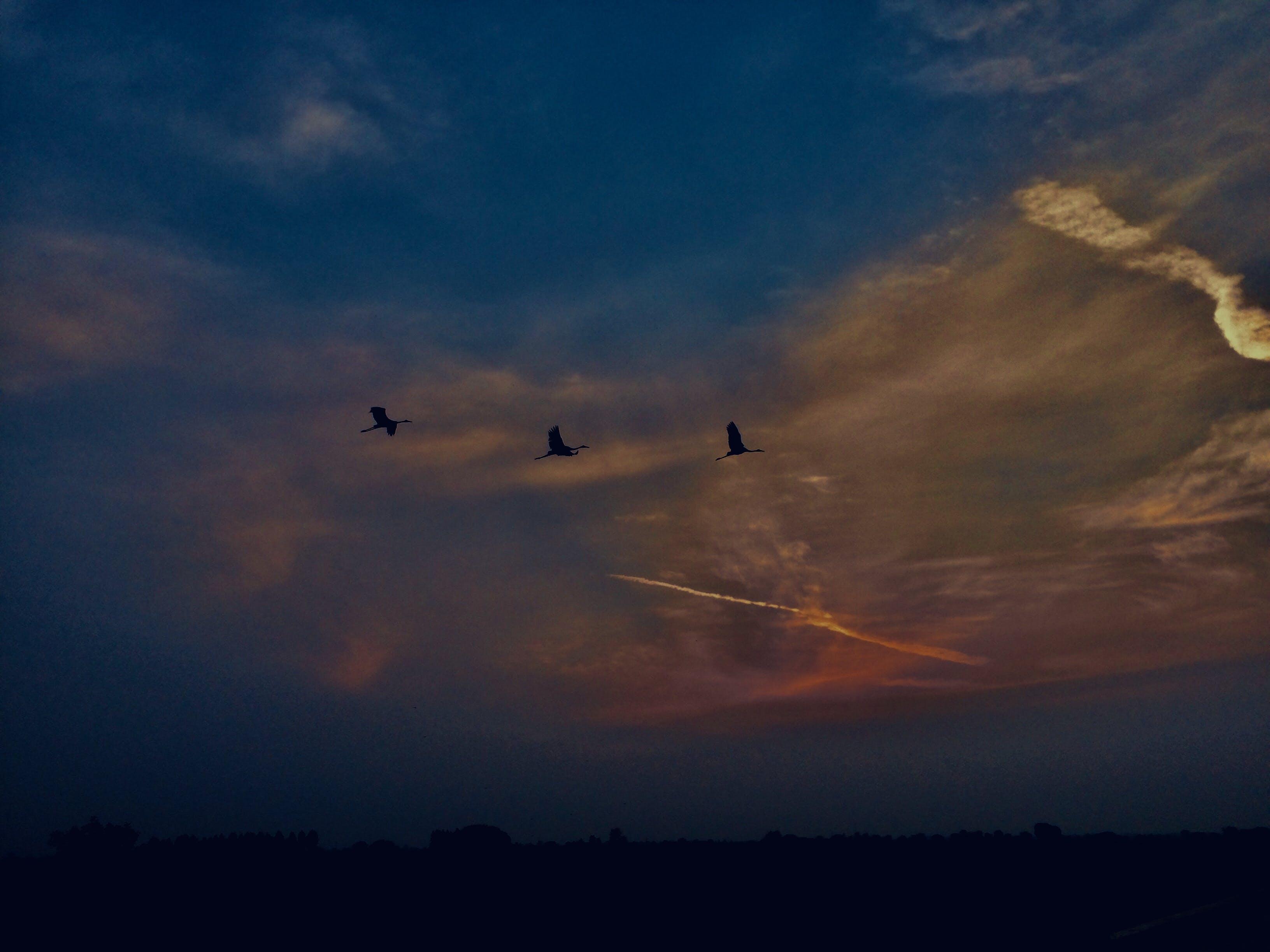 Základová fotografie zdarma na téma #birds