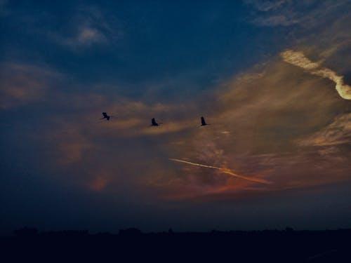 Бесплатное стоковое фото с #birds