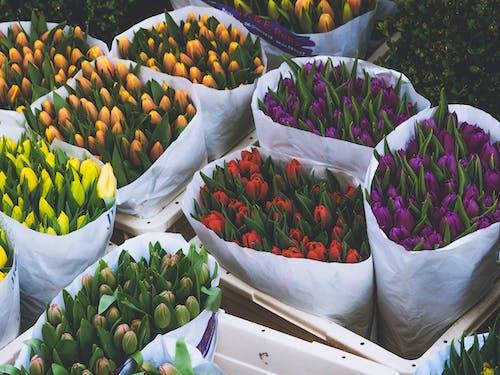 Безкоштовне стокове фото на тему «барвистий, букет, вродлива, завод»