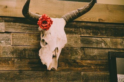 Fotobanka sbezplatnými fotkami na tému dekor, dekorácia, drevený, hrôzostrašný