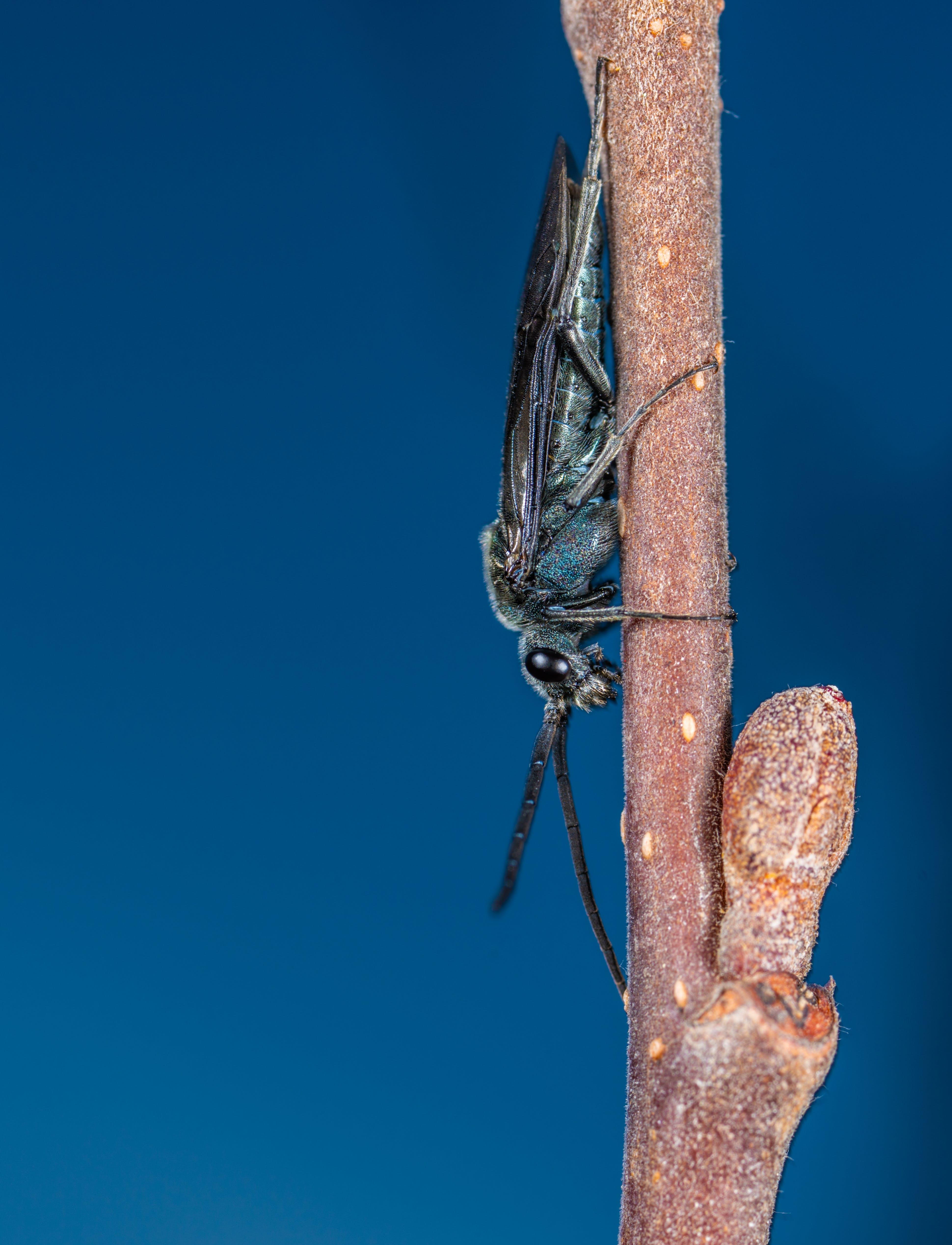 Kostenloses Stock Foto zu biologie, fokus, insekt, makro