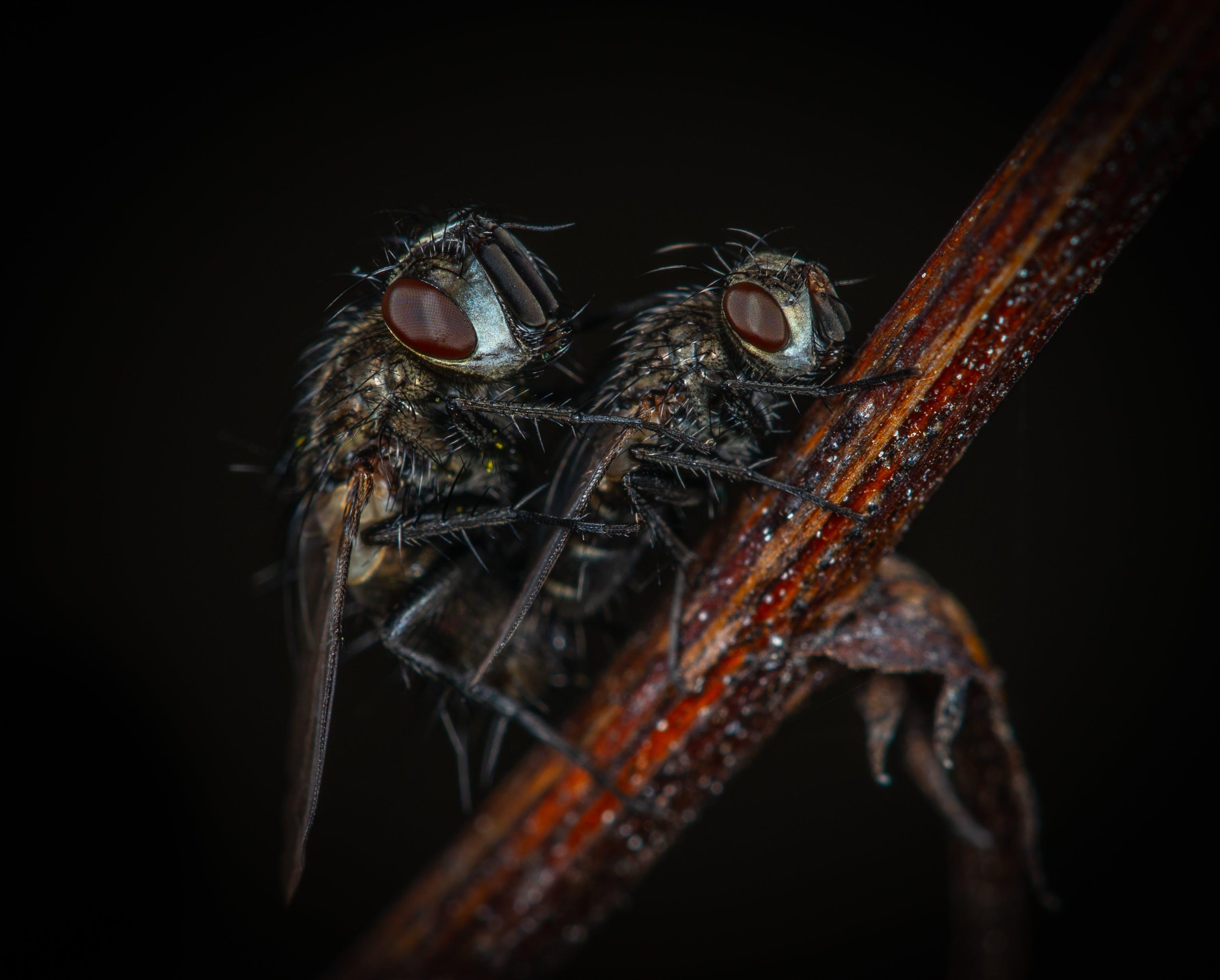 Kostenloses Stock Foto zu flügel, fokus, gruselig, insekt