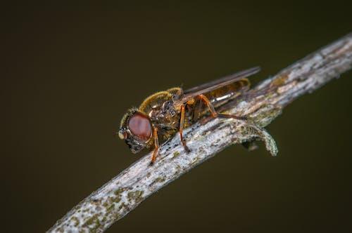 Základová fotografie zdarma na téma hmyz, makro, malý, škůdci