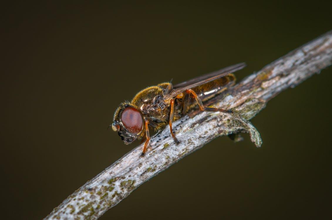 insecto, macro, pequeño