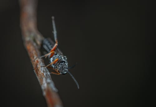 Macro Photography of Black Insect on Brown Twig