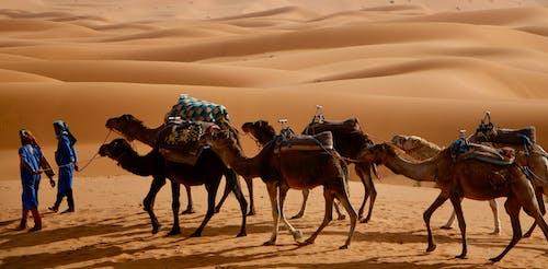 berberi, berberiler, büyük sahra, çöl içeren Ücretsiz stok fotoğraf