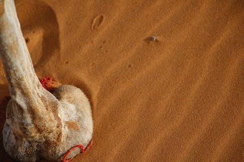 çöl, deve, deve ayağı, Fas içeren Ücretsiz stok fotoğraf