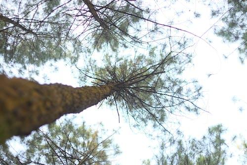 Kostenloses Stock Foto zu bäume