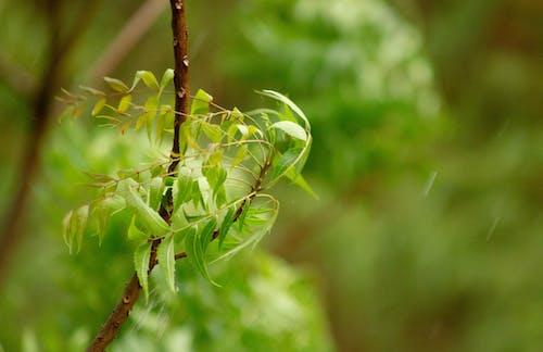 Foto d'estoc gratuïta de brisa, després de la pluja, planta medicinal, tarda