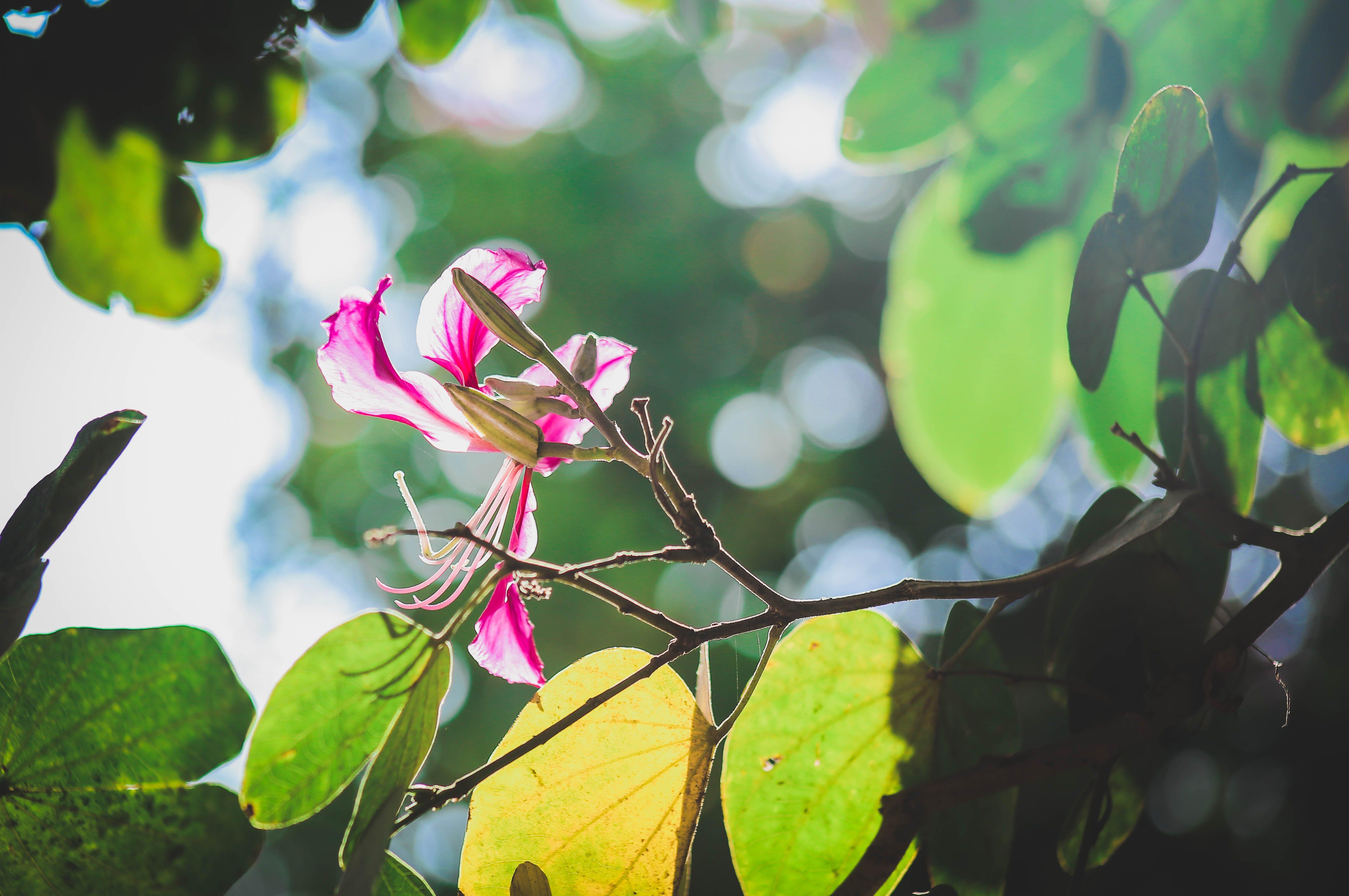 Free stock photo of beautiful flowers, morning sun, natue