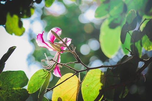 Kostnadsfri bild av morgonsol, vackra blommor