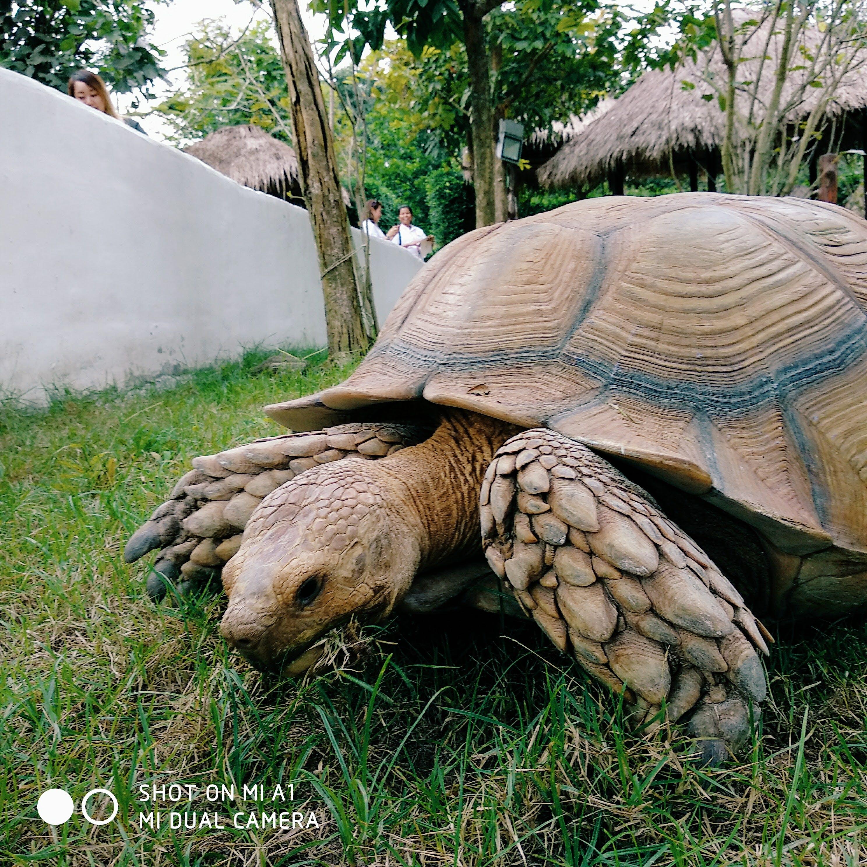 Free stock photo of thailand, travel, turtle