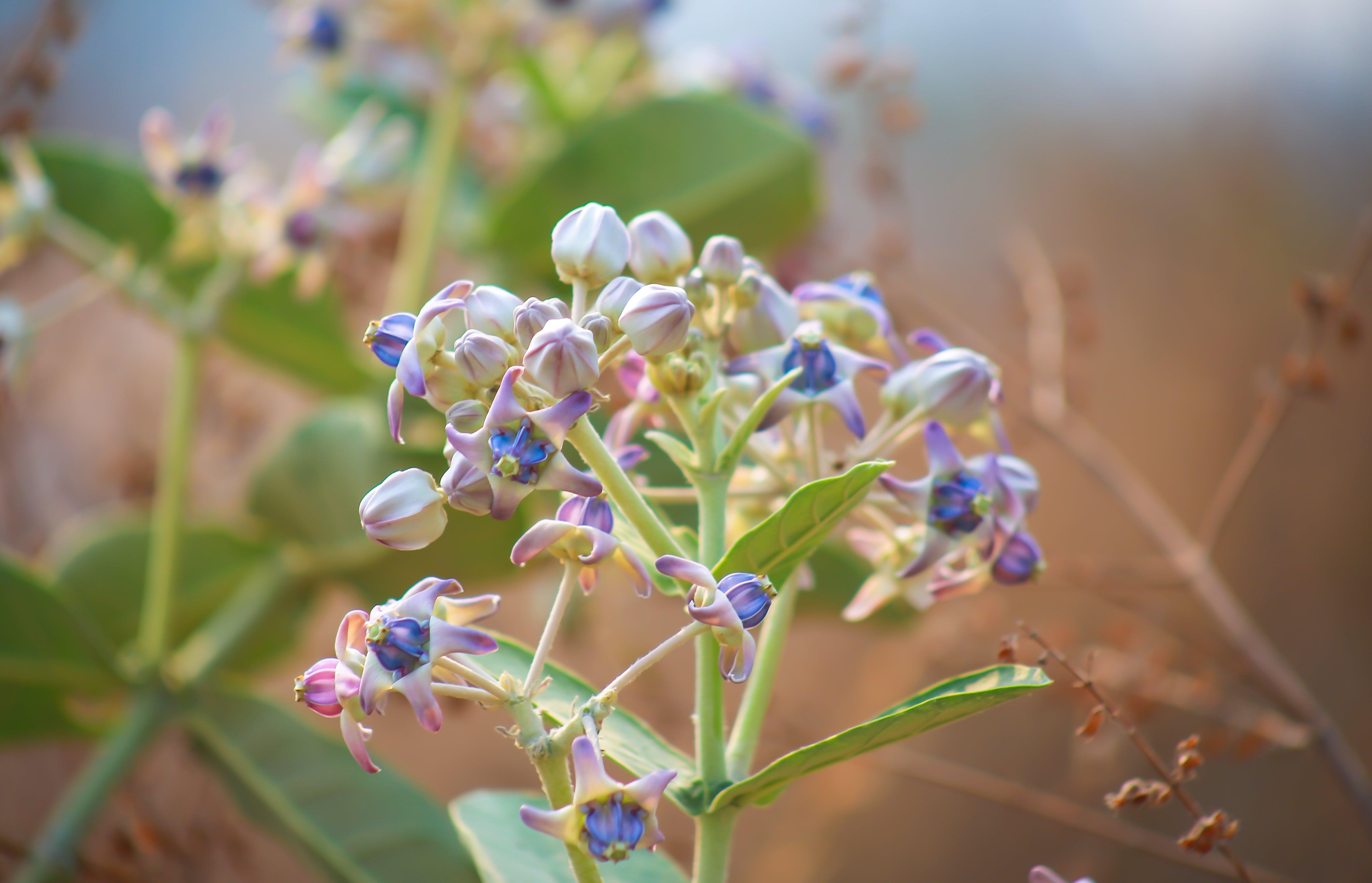 Free stock photo of clarity, pink flower, purple flower, wild flower