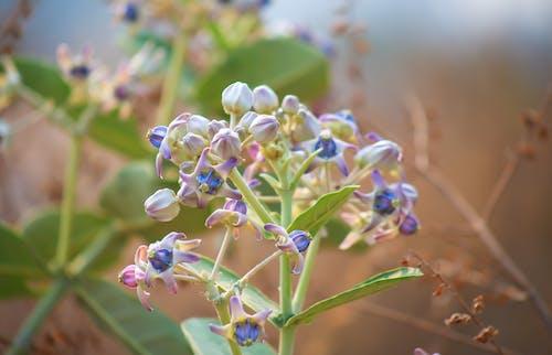 Foto d'estoc gratuïta de claredat, flor morada, flor rosa, flor silvestre