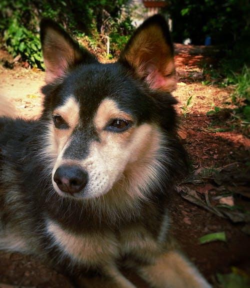 Ảnh lưu trữ miễn phí về #chó, #doggy