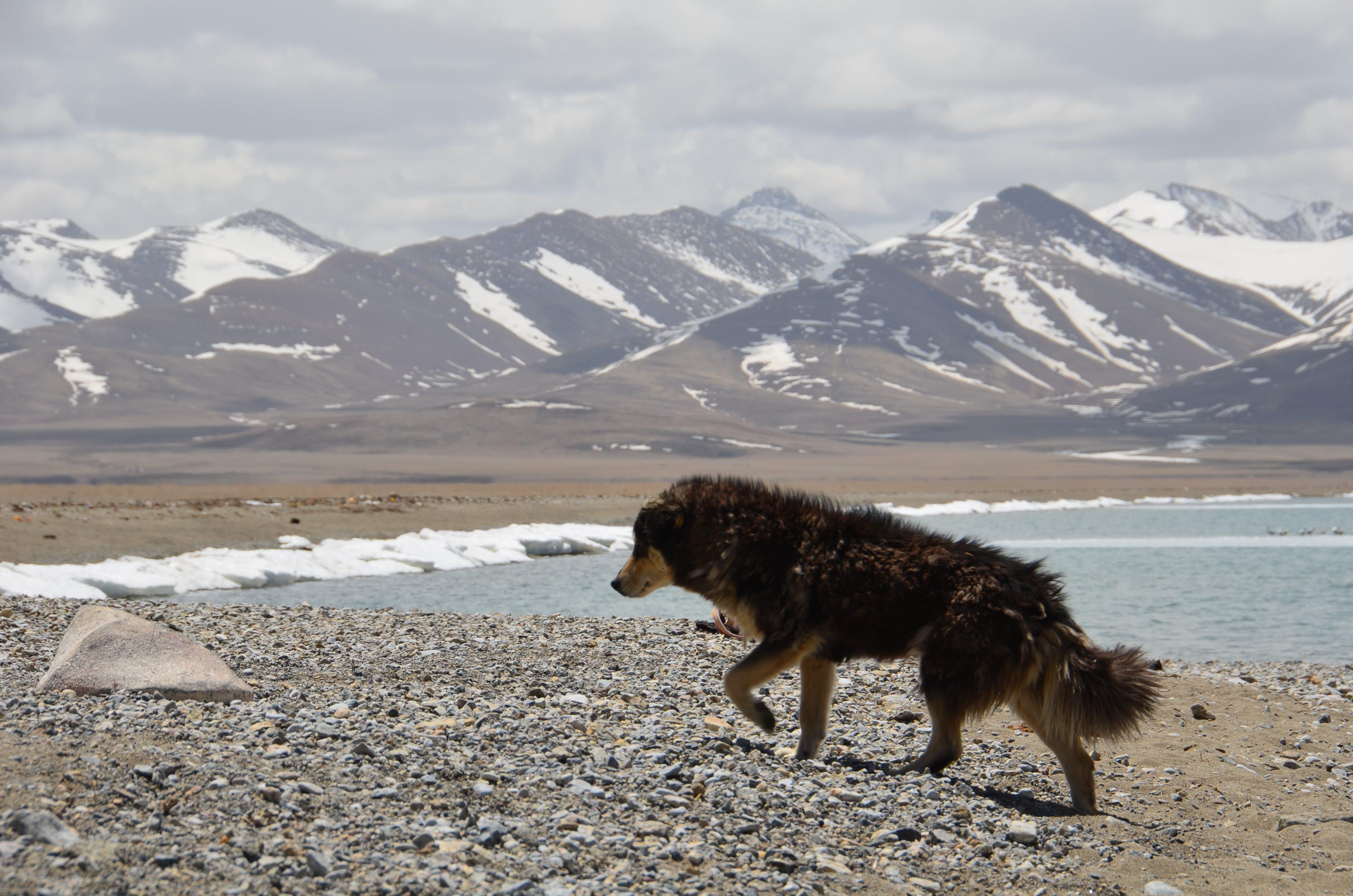 ペット, 冬, 動物, 夏の無料の写真素材