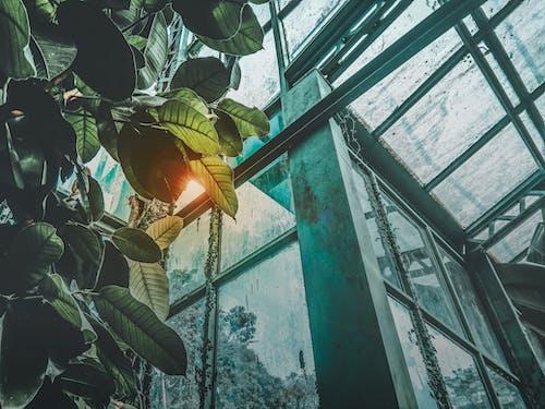 bardak, bina, bitkiler, cam içeren Ücretsiz stok fotoğraf