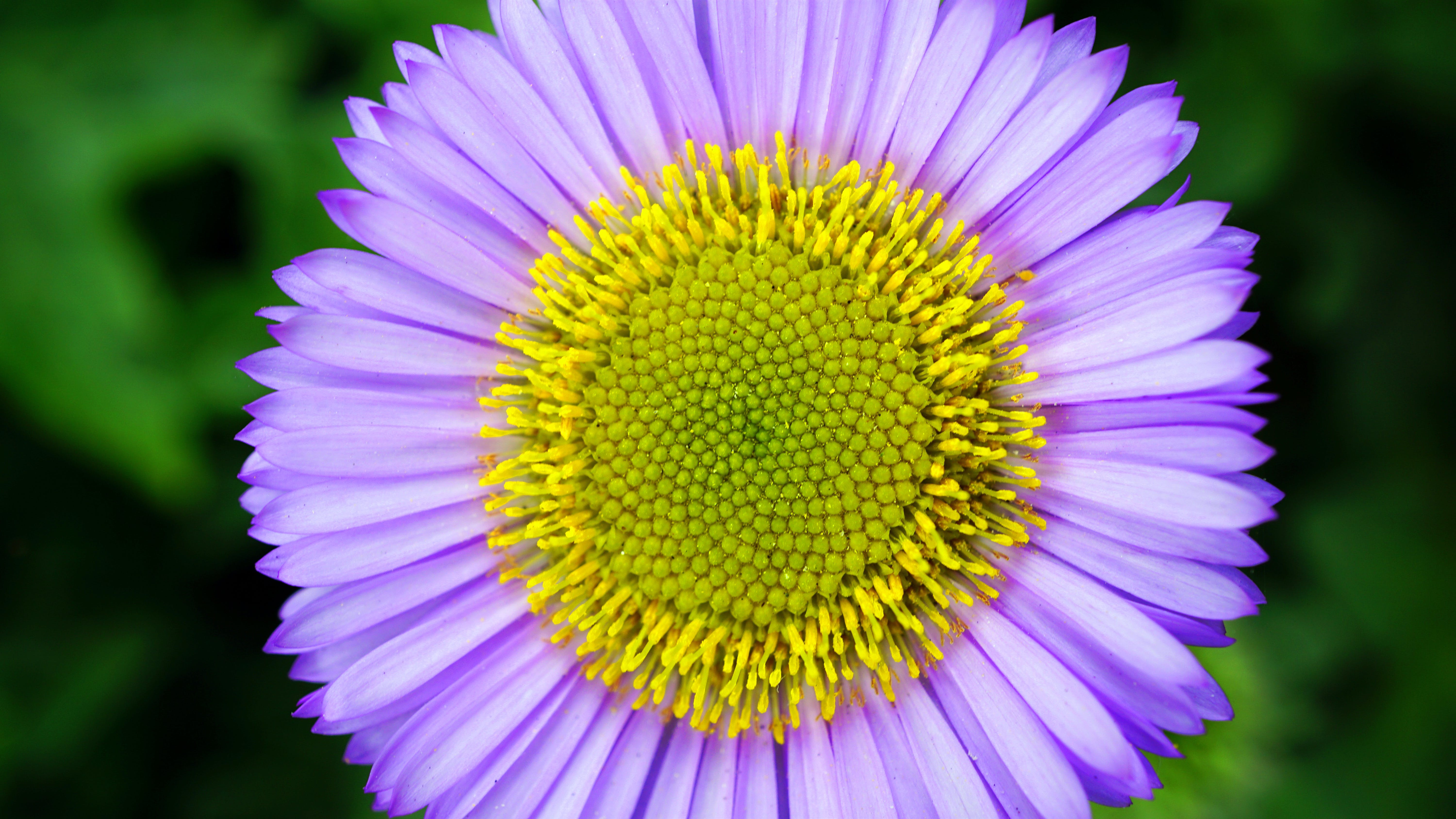 Micro Photography Purple and Yellow Flower