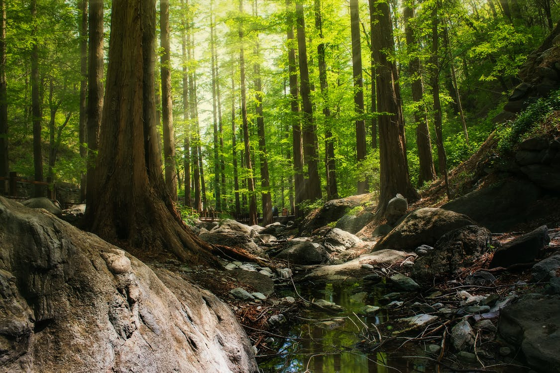 Photography of Forest During Daytime