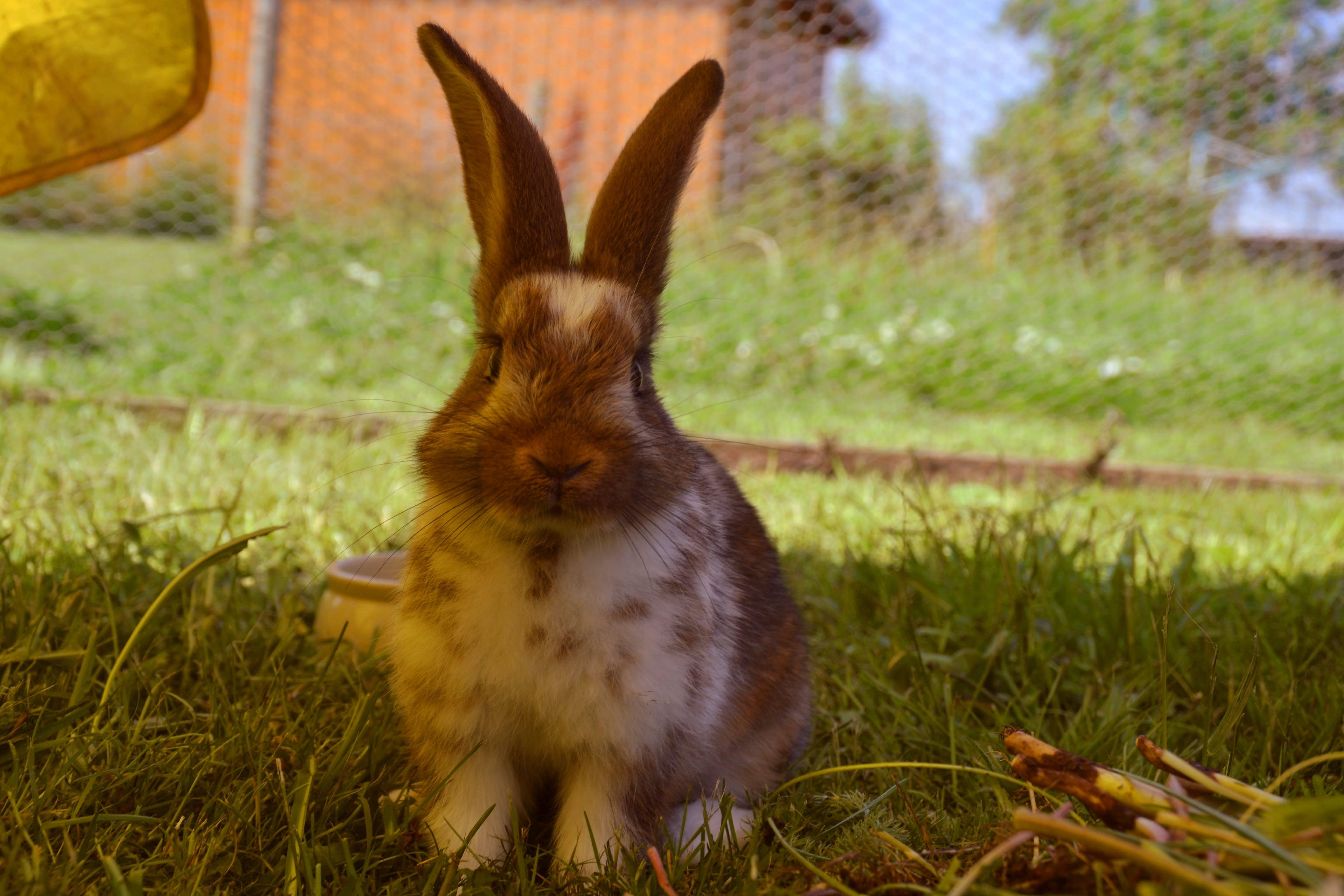 Free stock photo of annimal, cute, cute animals, garden