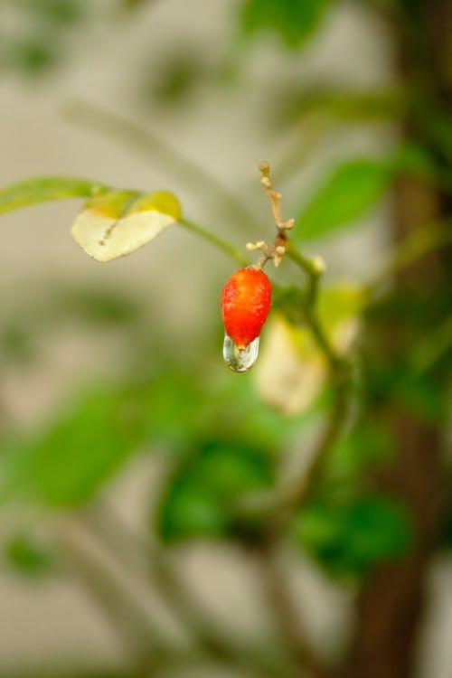 คลังภาพถ่ายฟรี ของ flowerphoto, flowerphotography, nature_perfection, ดอกไม้