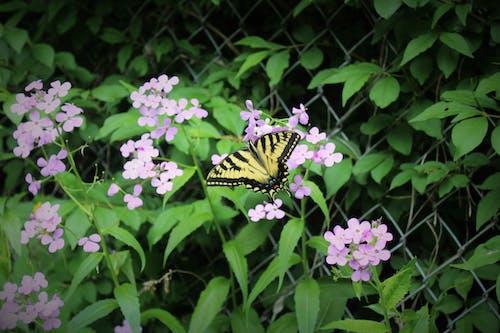 Ảnh lưu trữ miễn phí về Con bướm, công viên, đẹp, hệ thực vật