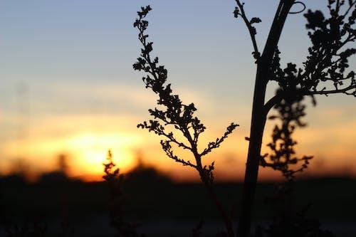 Foto profissional grátis de entardecer, golden sun, natureza, plantas