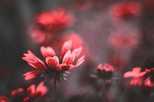 Základová fotografie zdarma na téma flóra, hloubka ostrosti, jemný, krásný