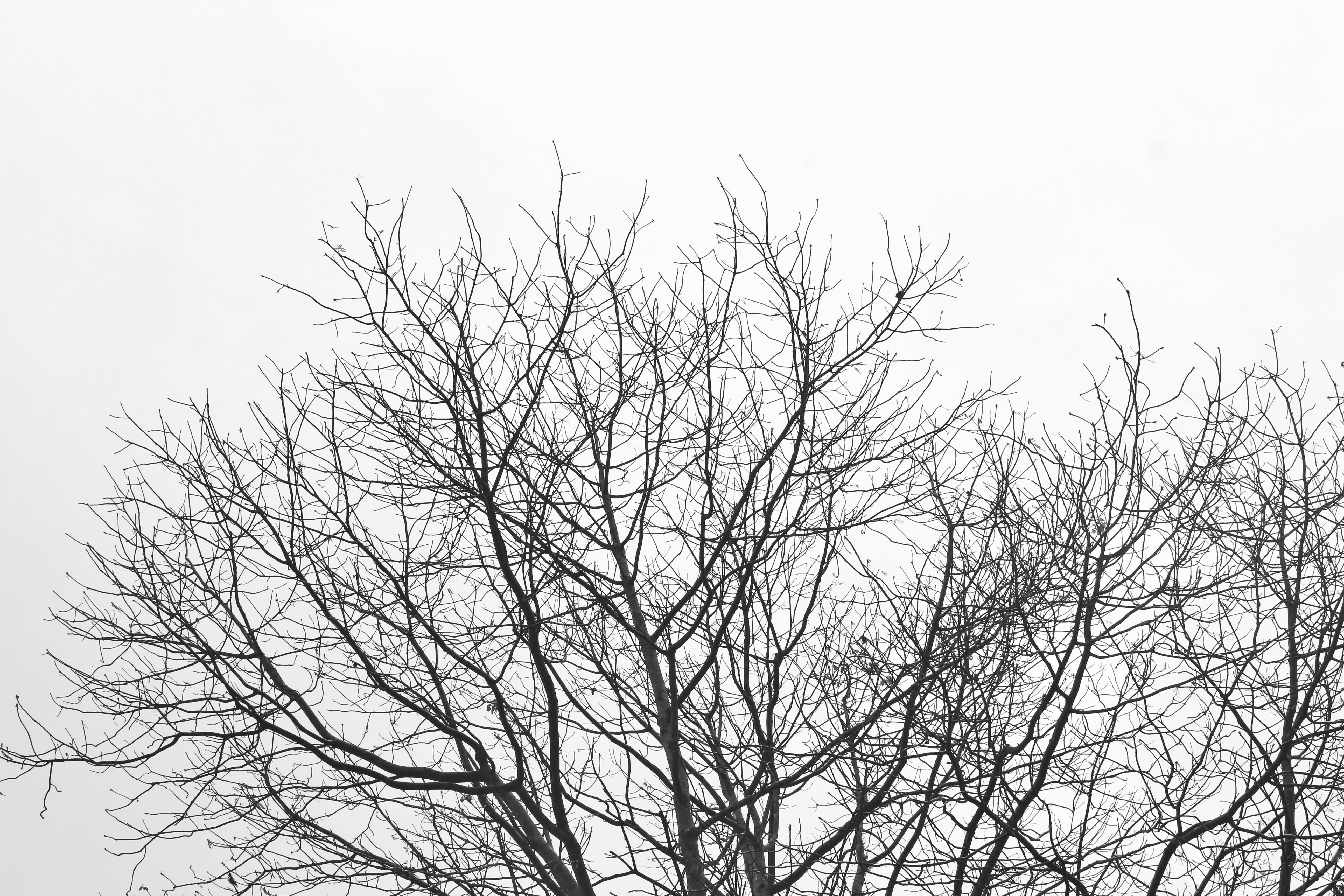 Free stock photo of abstract, black-and-white, branch, branches