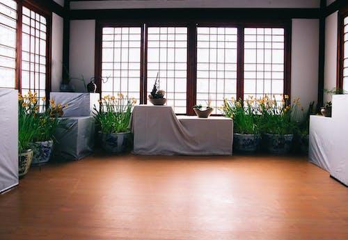 Gratis arkivbilde med blomster, blomsterpotter, tregulv, vinduer