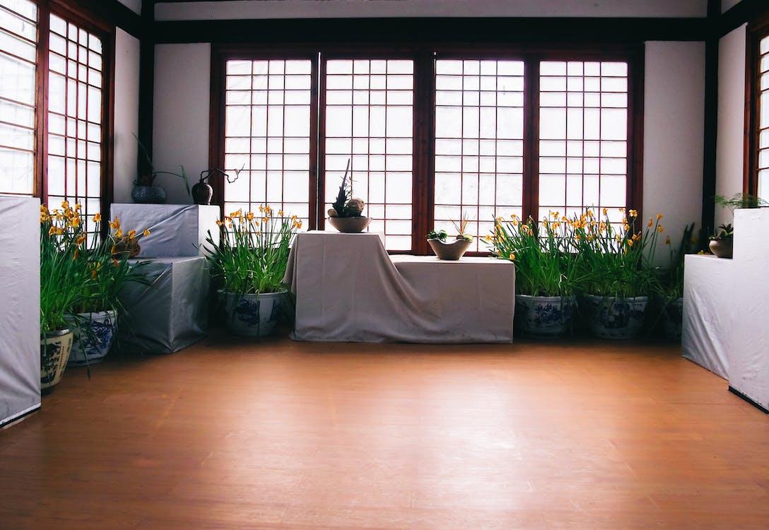 Green Leafy Plant on White Blue Floral Pot Inside White Black Room