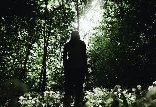 站在森林裡的人的身影