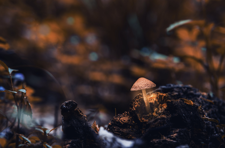 Macro Photography of Mushroom