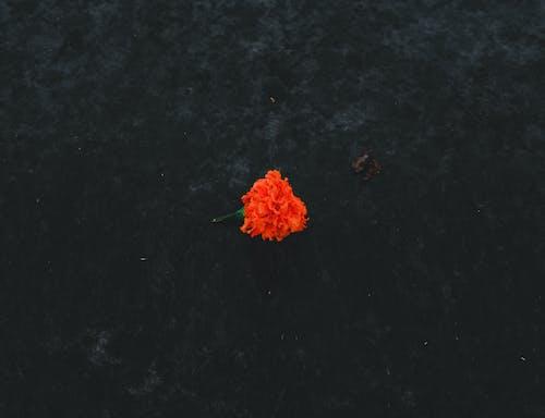 Ilmainen kuvapankkikuva tunnisteilla amoled, appelsiini, avioliitto, ei ihmisiä