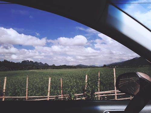Foto d'estoc gratuïta de camp de blat de moro, cel blau, cotxe, núvol