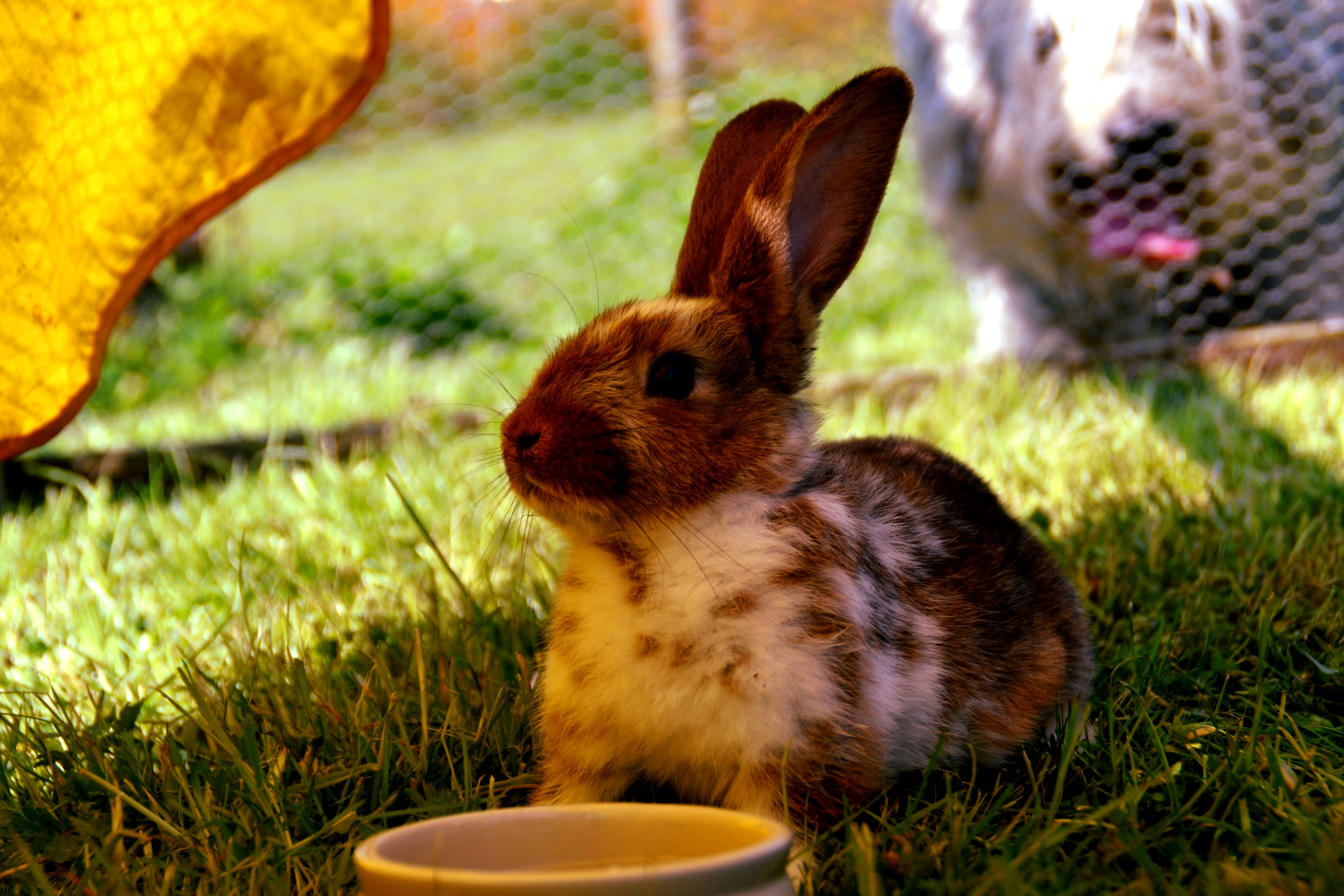 Brown and White Rabbit on Green Grass