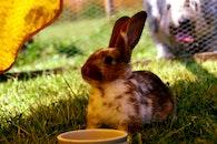 animal, pet, cute