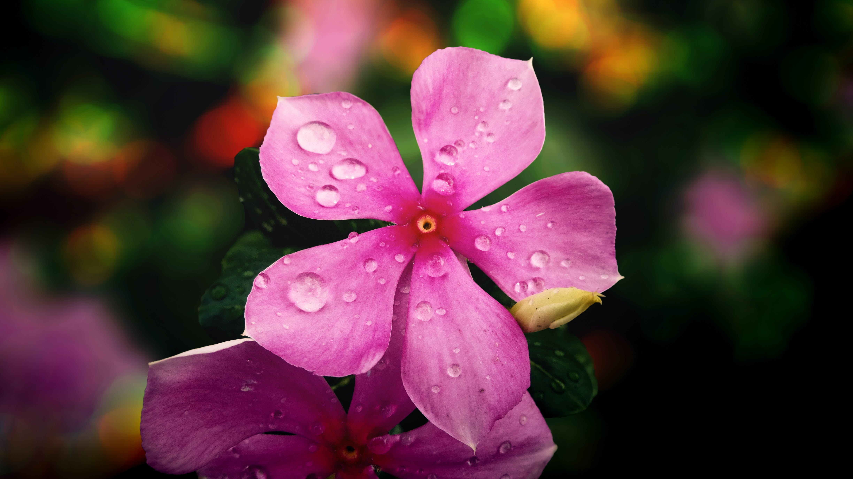 Free stock photo of flower, flower head, nature, petal