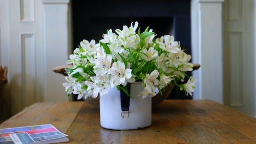 Ilmainen kuvapankkikuva tunnisteilla kasvikunta, kimppu, kukat, kukinta