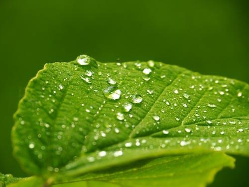Foto d'estoc gratuïta de fulla, gotes d'aigua, macro, planta