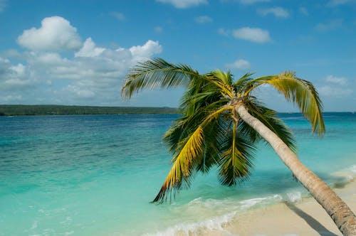 Ilmainen kuvapankkikuva tunnisteilla hiekkaranta, Karibialainen, palmu, palmunlehvät