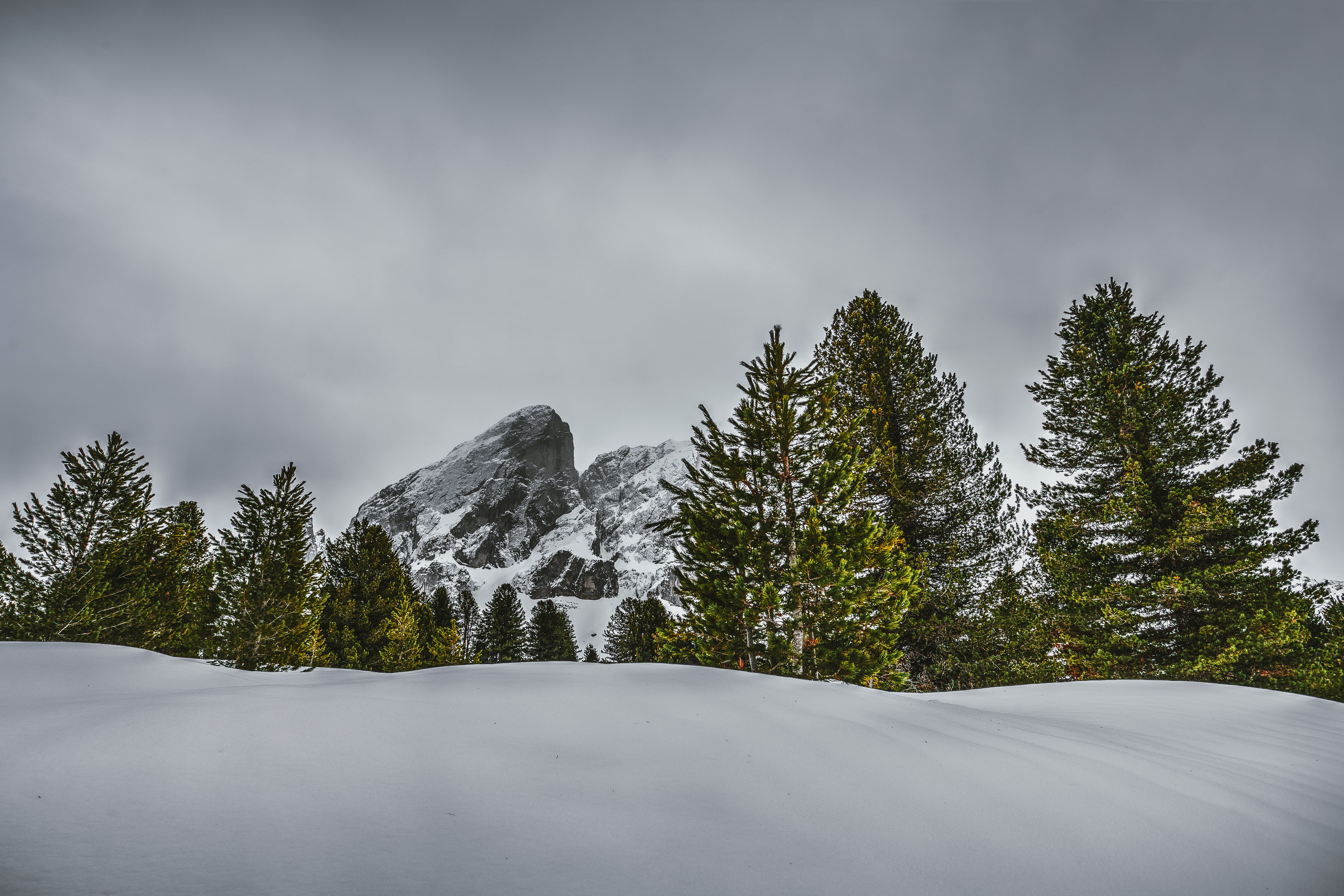 Photography of Pine Trees on Snow-capped Mountains