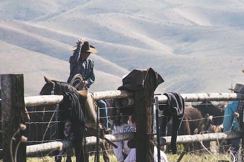 Ilmainen kuvapankkikuva tunnisteilla asu, cowboy, cowgirl, eläimet