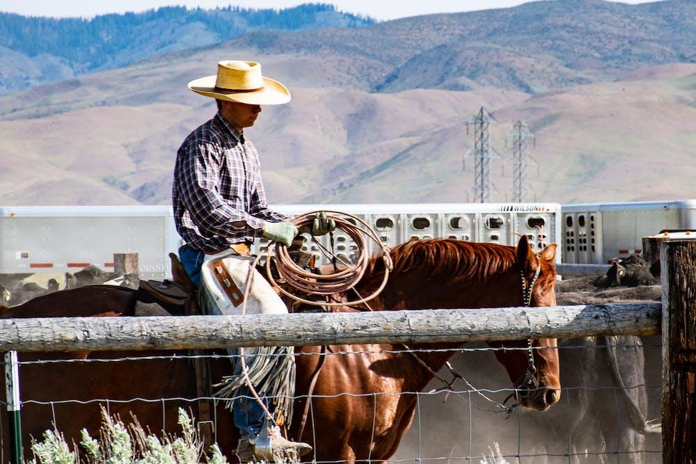 Man riding a brown horse. | Photo: Pexels