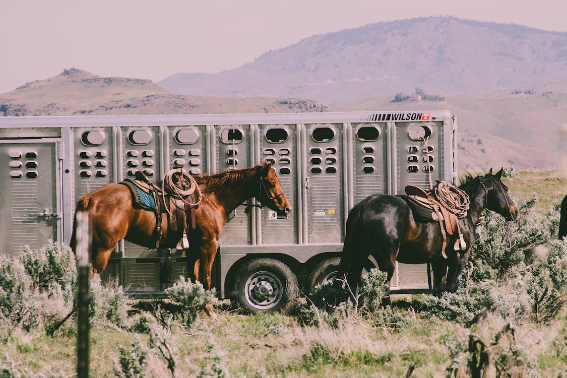 가축, 경치, 농장